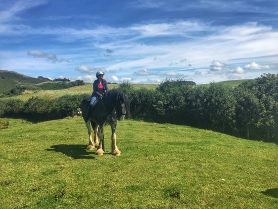 Cumbrian Heavy Horses: photo0.jpg