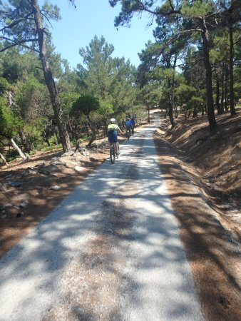Island Ikaria Activity Tours: gentle downhill through the forest