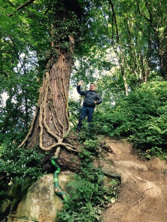 Plessey Woods Art Trail
