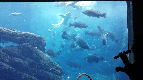 uShaka Sea World Aquarium: 20170807_143600_large.jpg