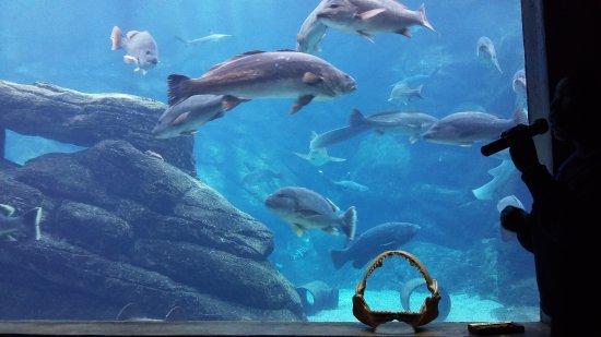 uShaka Sea World Aquarium: 20170807_143239_large.jpg
