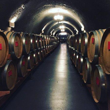 Dayton, OR: Wine cave.