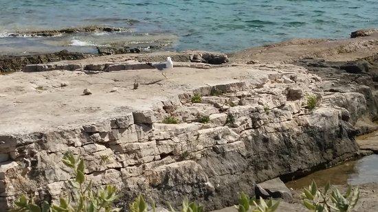 Pavicini, Croacia: 20170811_154859_large.jpg