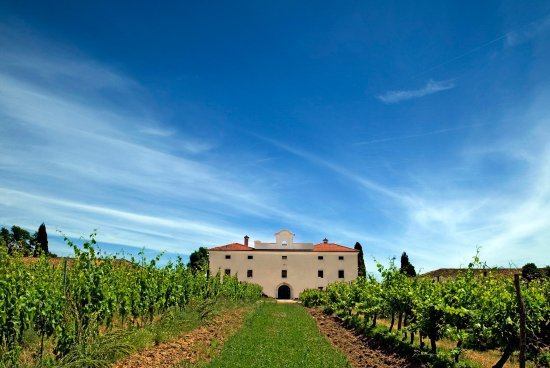 Cerovlje, โครเอเชีย: Dvorac Belaj produces wines from the vineyards surrounding the estate