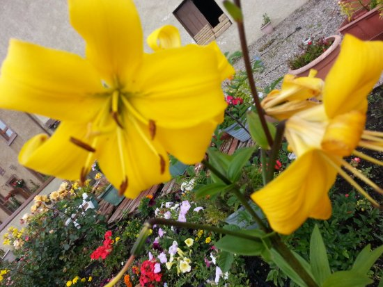 Helmsdale, UK: Blumen im Vorgarten