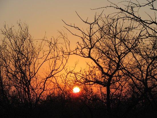 Shiduli Private Game Lodge: Sunrise during morning drive....dress warmly in winter!