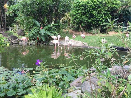 Foto jardin botanique de deshaies deshaies - Jardin botanique guadeloupe basse terre ...