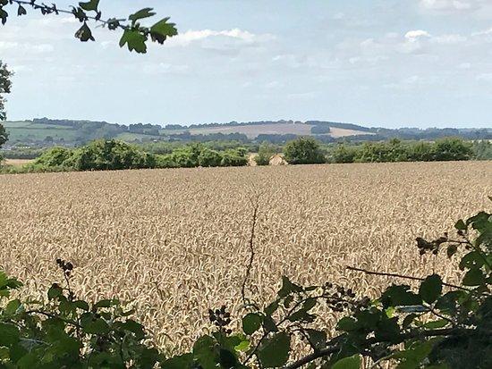 Horndean, UK: photo6.jpg