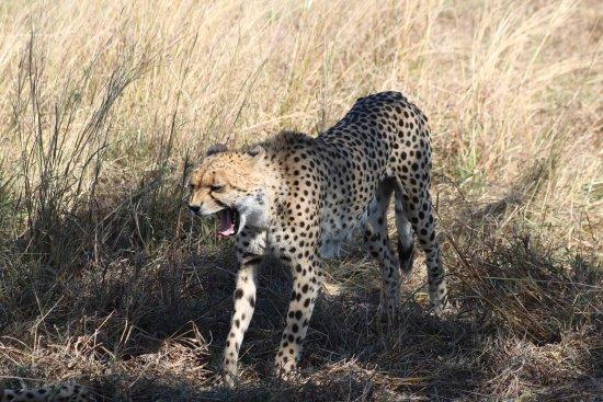 Kasane, Botswana: photo0.jpg