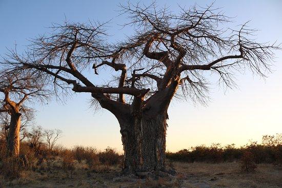Kasane, Botswana: photo1.jpg