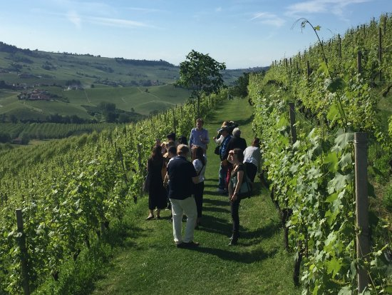 Новента-Падована, Италия: Walking through the vineyards of Barolo Bricco Boschis, Langhe