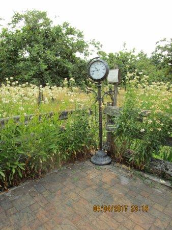 Cobble Hill, Canada: Daisies