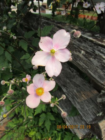 Cobble Hill, Canada: Sweet flowers