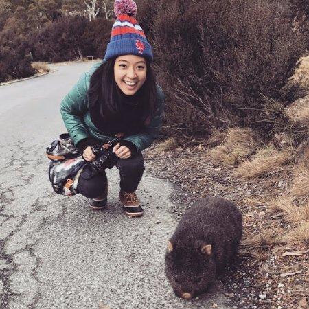 Ulverstone, Australia: Wombat sighting near Cradle Mountain