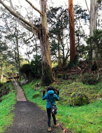 Ulverstone, Australia: Enchanted Walk