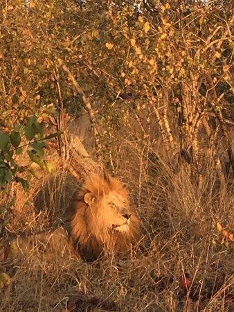 Mala Mala Private Game Reserve, แอฟริกาใต้: photo6.jpg