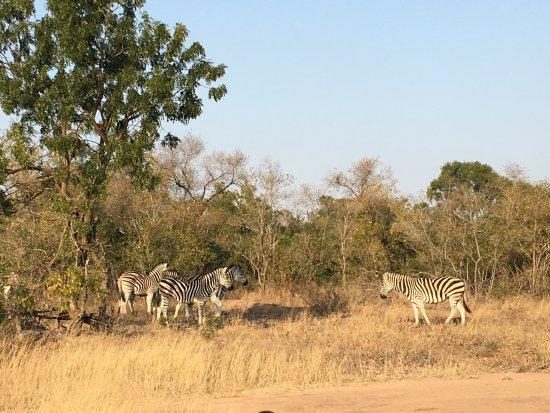 Mala Mala Private Game Reserve, แอฟริกาใต้: photo8.jpg