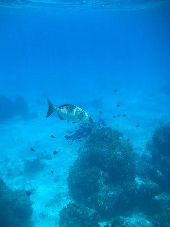 Playa Palancar: photo5.jpg