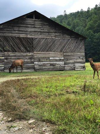 Национальный парк Грейт-Смоки-Маунтинз, Северная Каролина: photo2.jpg