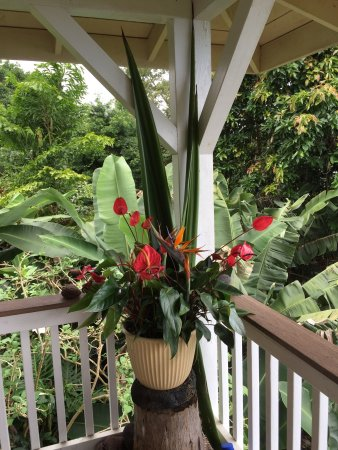 Holualoa, Havai: photo2.jpg