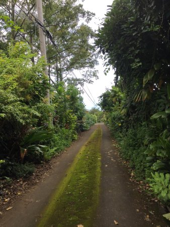Holualoa, Havai: photo5.jpg