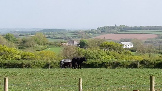 Holsworthy, UK: Another view from Lizzy's Larder