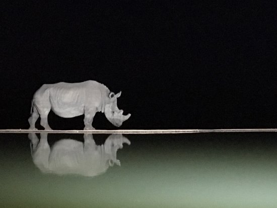 Welgevonden Game Reserve, Zuid-Afrika: photo0.jpg