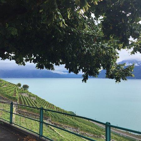 St-Saphorin-Lavaux, Suiza: photo2.jpg