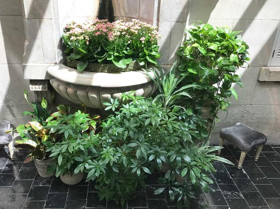 """Greenhouse at the Jefferson Hotel - romantic """"nook"""""""