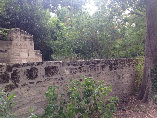 Bild von jardin des plantes montpellier - Jardin d essence montpellier ...