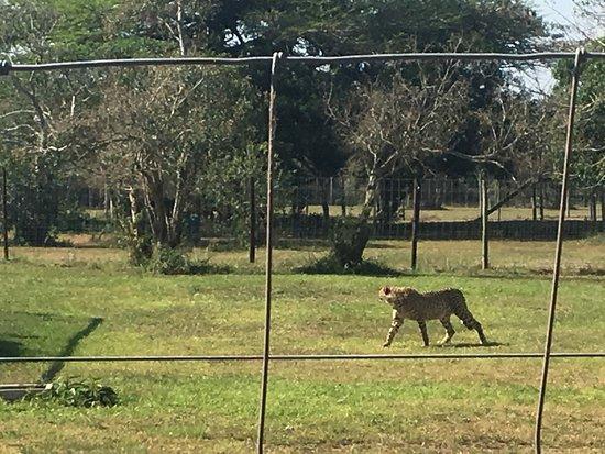 Hluhluwe Game Reserve, Afrika Selatan: photo2.jpg