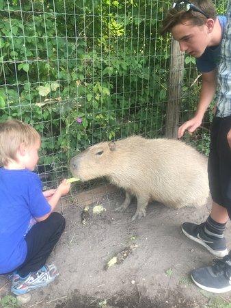 Lake Country, Canadá: Feeding the capybara