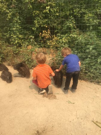 Lake Country, Kanada: young boys and the baby emus