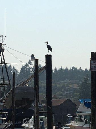Gig Harbor, واشنطن: photo9.jpg
