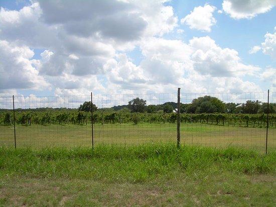 Spicewood, TX: Vineyards leaving