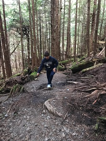 Ketchikan Rainbird Trail All You Need To Know Before You