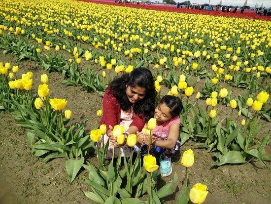 Mount Vernon, Ουάσιγκτον: Skagit Tulip Festival