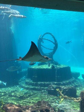 Marine Habitat at Atlantis照片