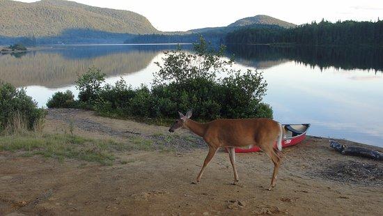 Mont-Tremblant National Park, Kanada: lac Monroe wildlife