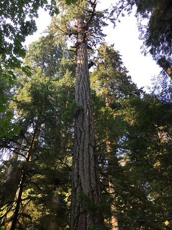Cathedral Grove: photo0.jpg