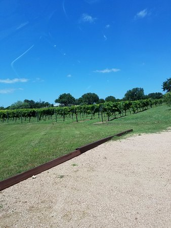 Spicewood, TX: The vineyard