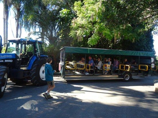 Duranbah, Australia: The tractor-train you tour the farm on.