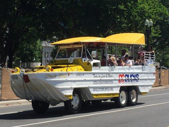 D.C. Ducks: Potomac River