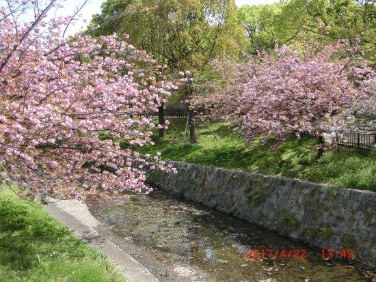 Kamisakabenishi Park