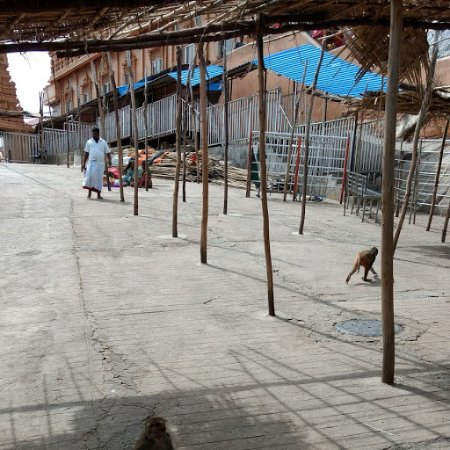 Yadagiri Gutta Temple: Monkeys in the shed