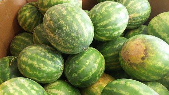 Spring, TX: Watermelon