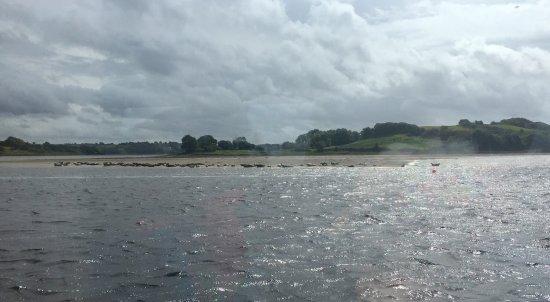 Donegal Town, Ireland: photo3.jpg