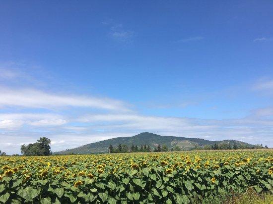 Borsod-Abauj-Zemplen County, Hungary: IMG-20170808-WA0004_large.jpg
