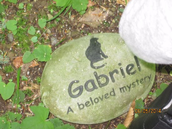 A headstone for a beloved cat at the pet cemetery Lily Dale.