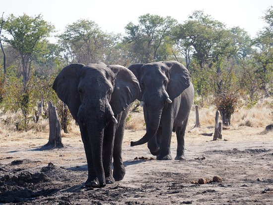 North-West District, Botswana: More elephants arriving to camp